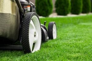žolės priežiūra